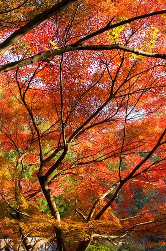 紅葉狩り2014 - 東山公園