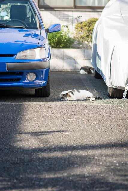 駐車場で寝るネコの写真