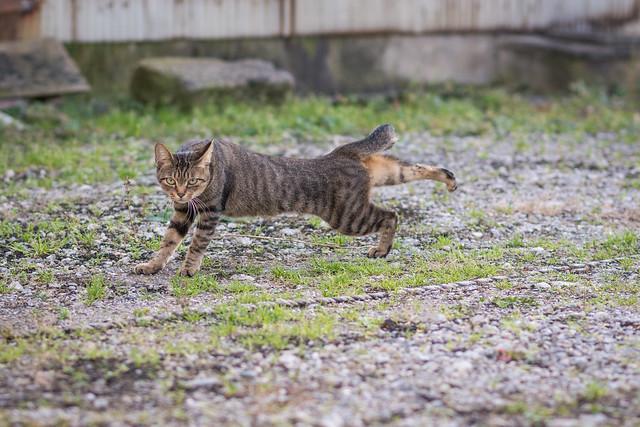 ストレッチをしているネコさんの写真