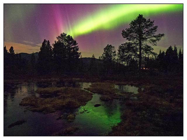 Aurora Borealis (1)