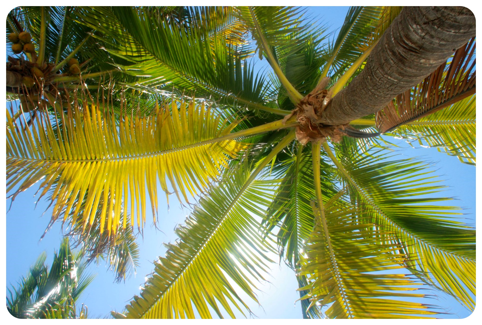 isla mujeres palm trees