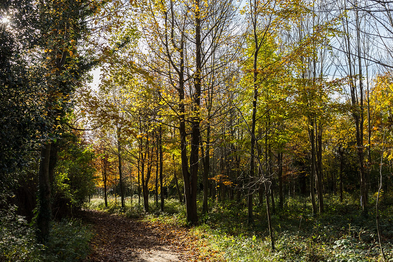 Autumn in the Woodland Walk