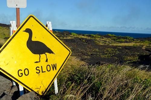 Go Slow for the Nene!