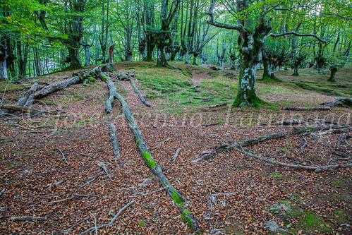 Parque Natural de #Gorbeia #DePaseoConLarri #Flickr      -1342