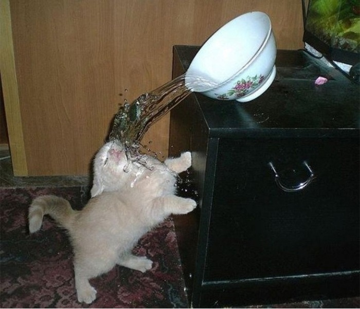 Кот – таблетка от плохого настроения! - ПоЗиТиФфЧиК - сайт позитивного настроения!