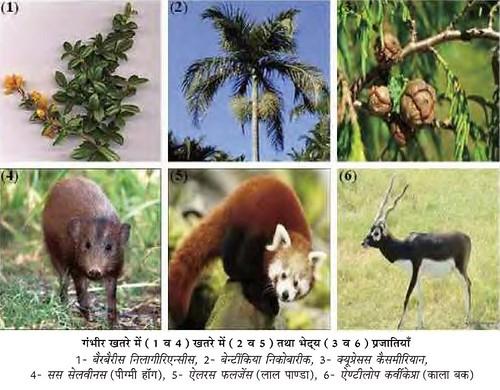 जैव-विविधता परिरक्षण और पर्यावरण