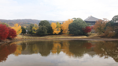 奈良公園紅葉