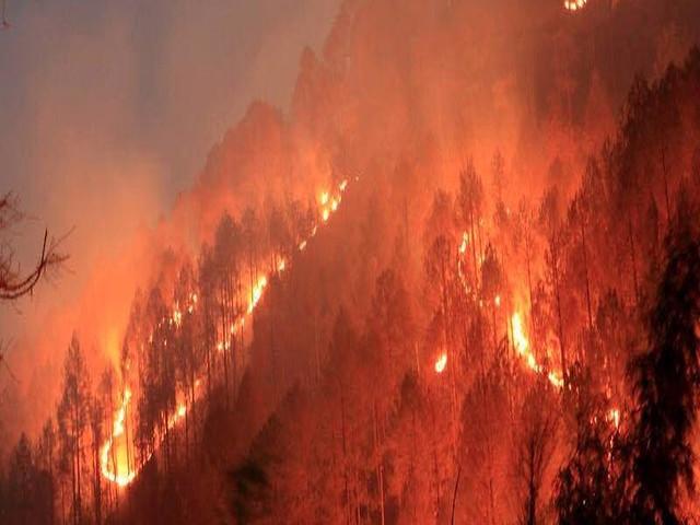 जंगलों की उपेक्षा के कारण लगते आग