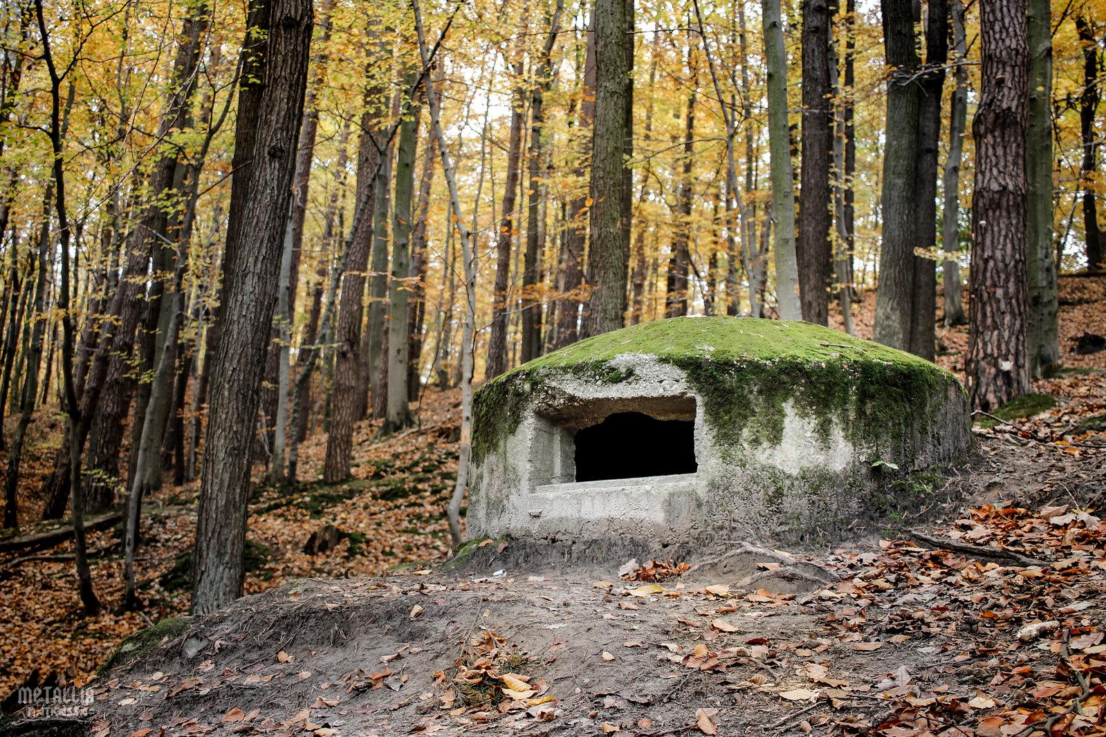 gdynia, redłowo, rezerwat przyrody kępa redłowska, kępa redłowska nature reserve, tricity sightseeing, gdynia sightseeing