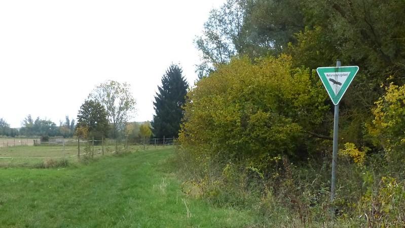 Selztal bei Elsheim