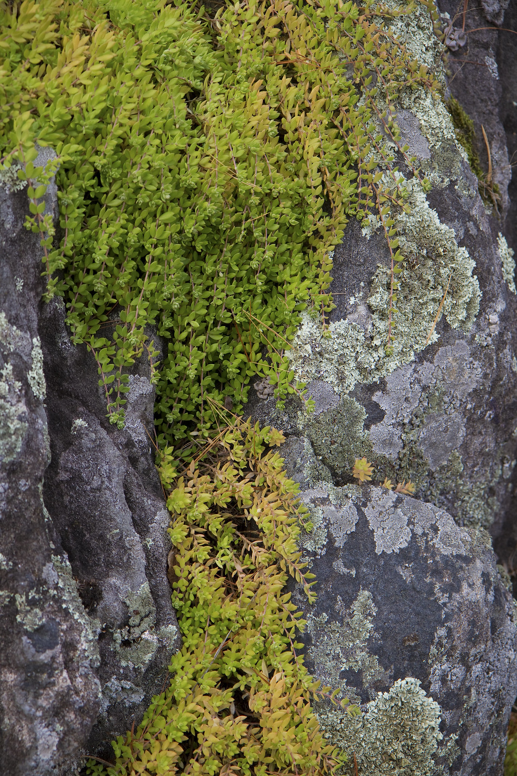 likin' the lichen
