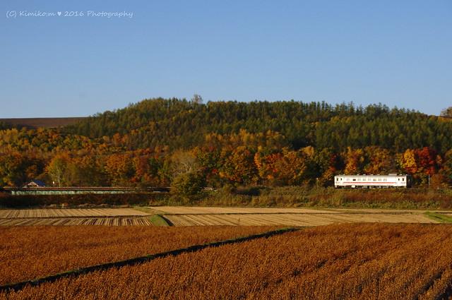 秋の富良野線2