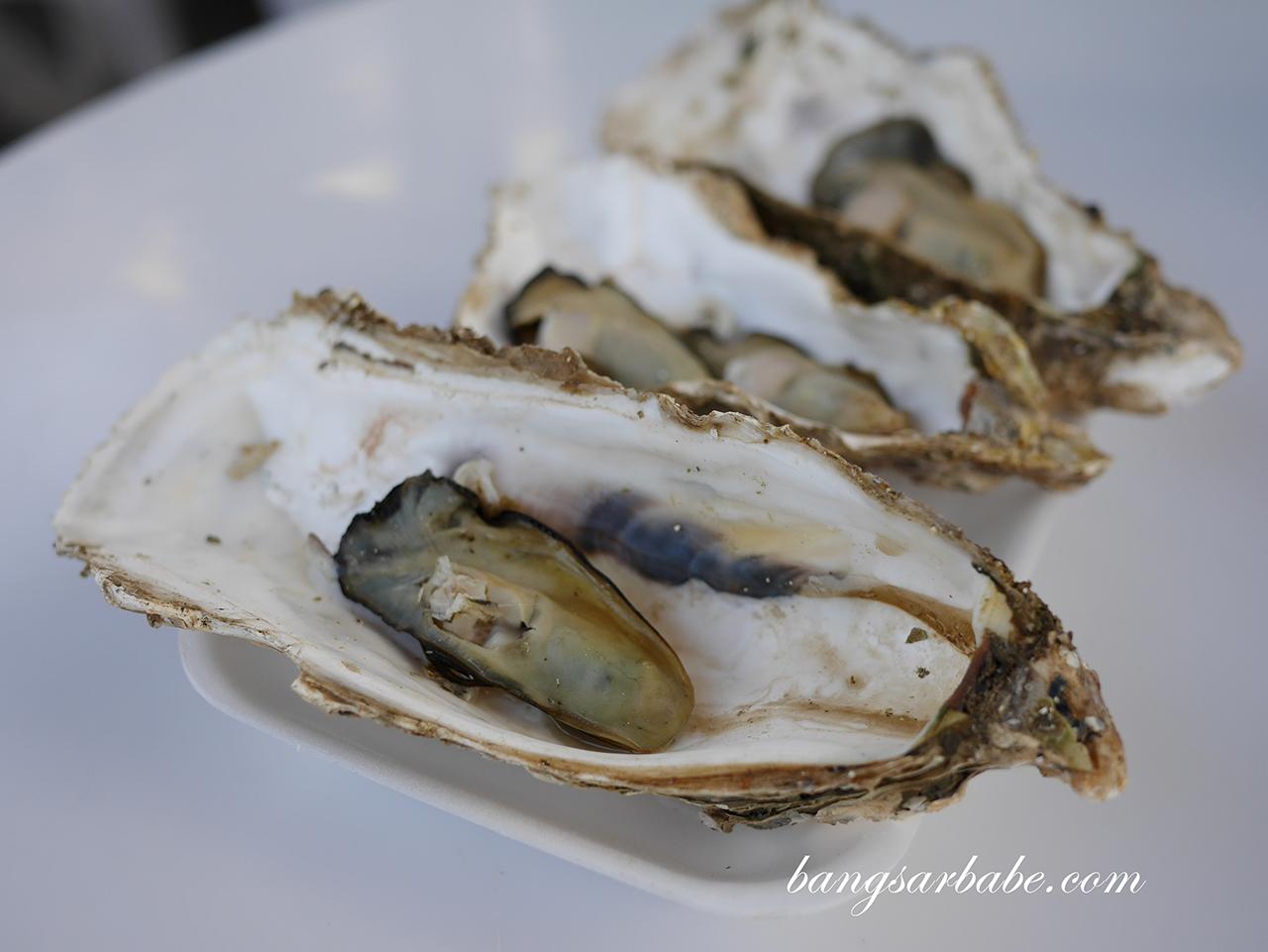 Oysters at Matsushima Kaigan Coast (2)