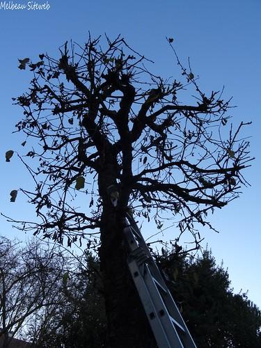 A table les oiseaux ! Dans le cerisier...