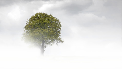 Tree in Hill Mist