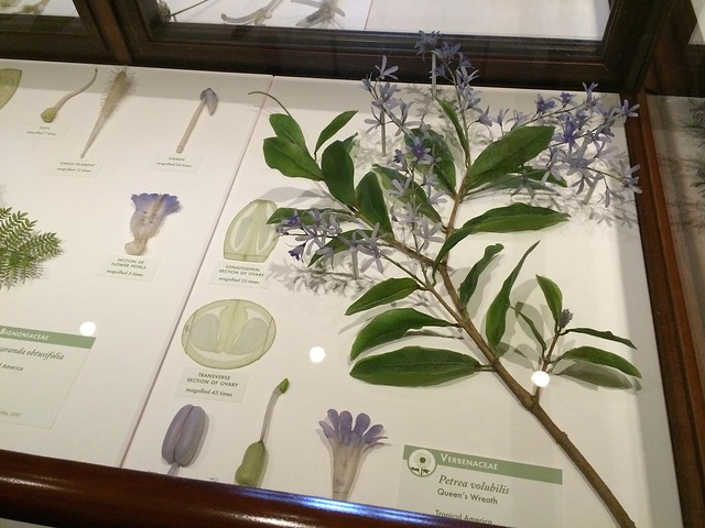 harvard museum of natural history