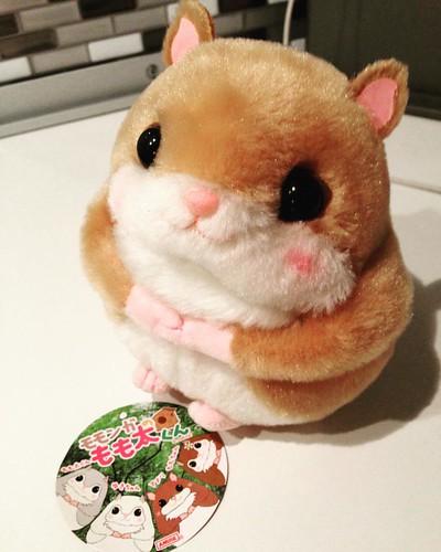 I was weak... my heart melted in front of this cutie 😍 #amusetoys #kawaii #kawaiiplush #flyingsquirrel #momonganomomota #momotakun