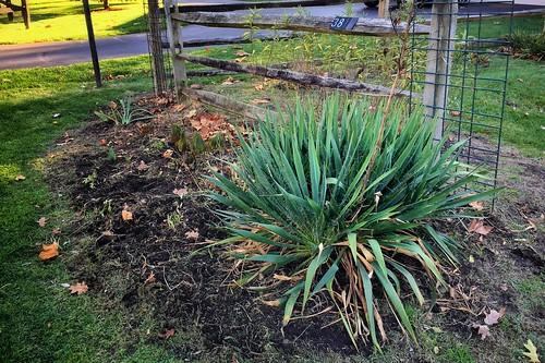 Garden Bloggers' Bloom Day, November 2016