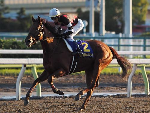 2015-11-03 大井09R JBCスプリント 02-コーリンベリー&松山弘平/WinningRun