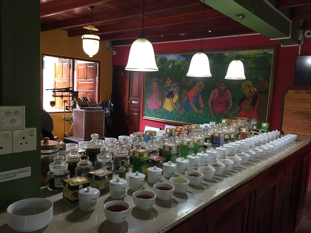 sampling 30 varieties of tea