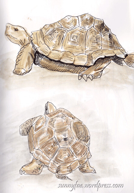 tortoise-sketches