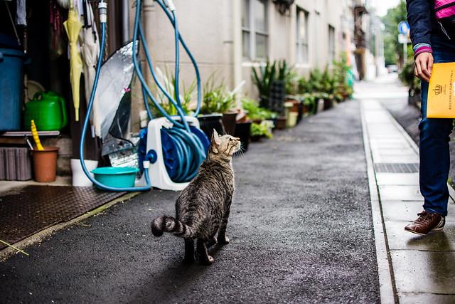 犬山で出会ったネコ