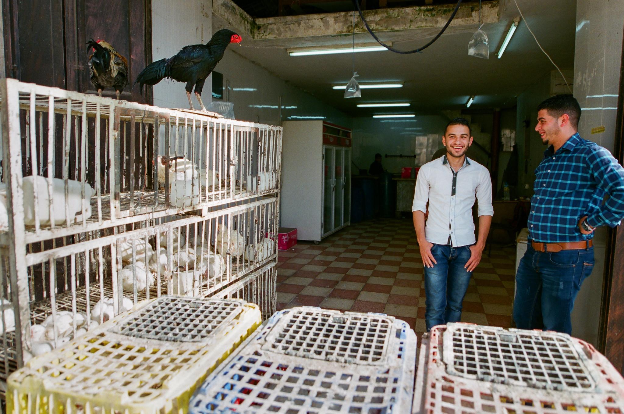 Hebron Chicken Vendors