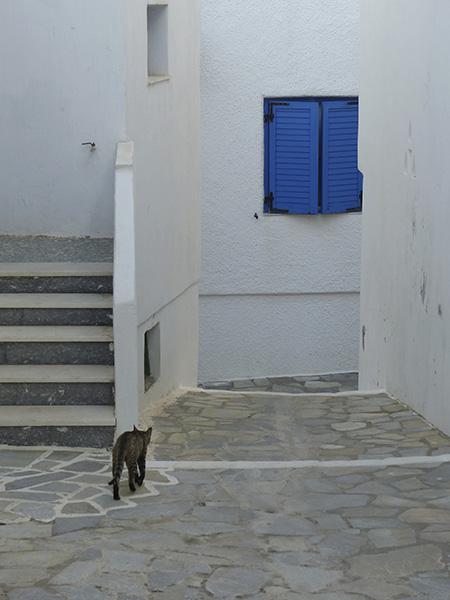 le chat s'en va