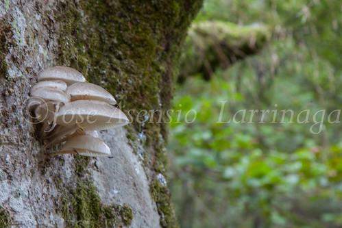 Parque Natural de #Gorbeia #DePaseoConLarri #Flickr      -1352