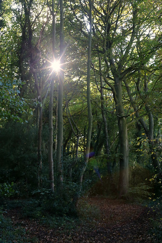An autumnal walk to Windy Ridge