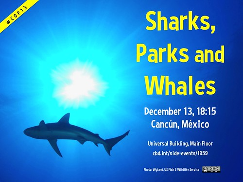 Sharks, Parks and Whales December 13, 18:15 #COP13 @brasildeovelhas @IUCNTourism