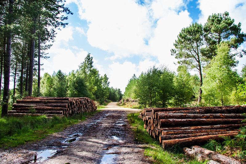 Log piles on the Sika Trail