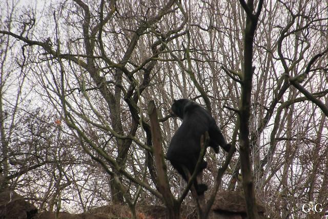 Tierpark Friedrichsfelde 20.11.201640