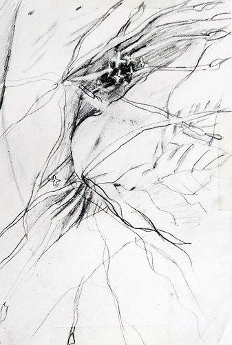 Pencil sketch Dancing Leafs of the Ixora Plant