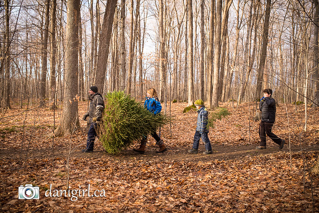 Christmas tree picking 2016-6