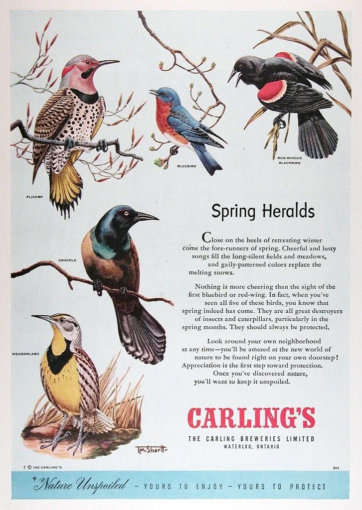 Carling-1950-birds