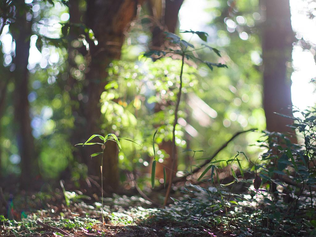 明治神宮の森の光