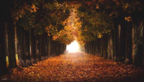 Autumn Boulevard