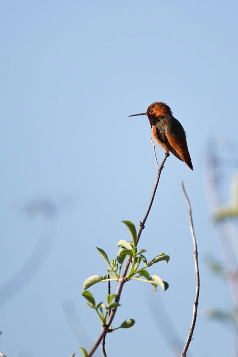 012416_birds19