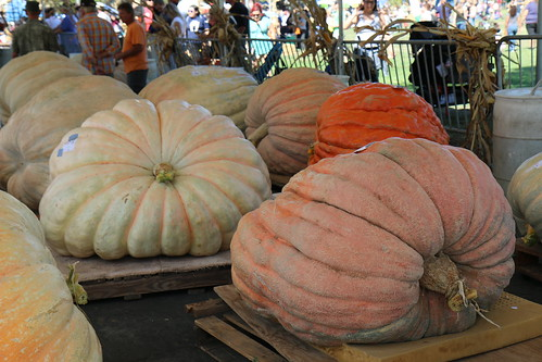 Giant Pumpkin Weigh-Off 2015