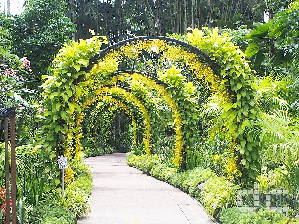botanic gardens, places of interest, singapore, singapore botanic gardens, unesco, golden shower arches, where to go in singapore, national orchid garden,orchid