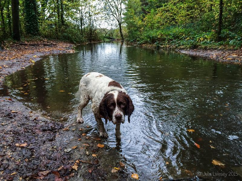The stream is very swollen today