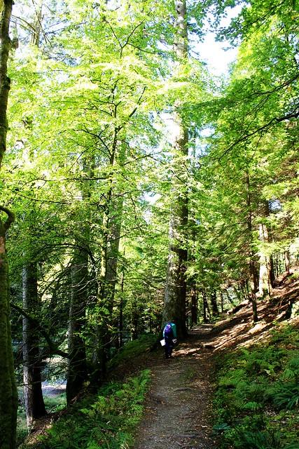 Path through Ardkinglas Woodland Garden, Argyll, Scotland.
