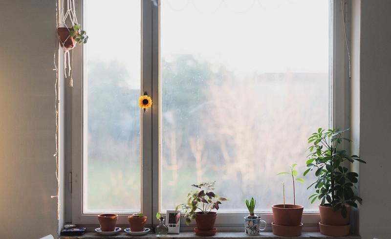 Trädgård O Sånt : Skrivdag u julkväll på rosendals trädgård amanda maria josefina