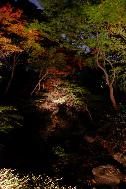 RIKUGIEN Colored Leaves light up 2016 09
