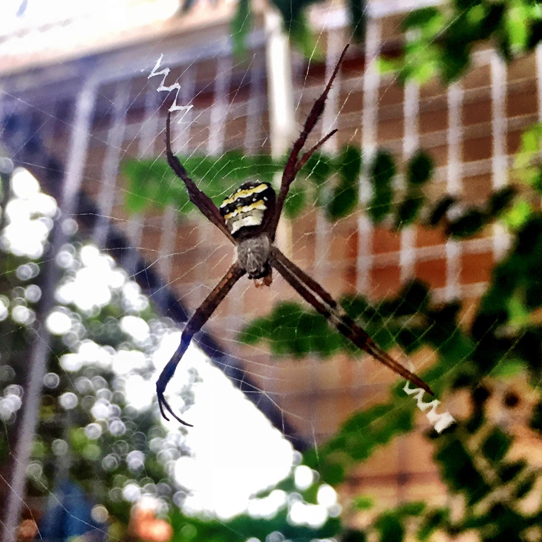 Spider... signature spider
