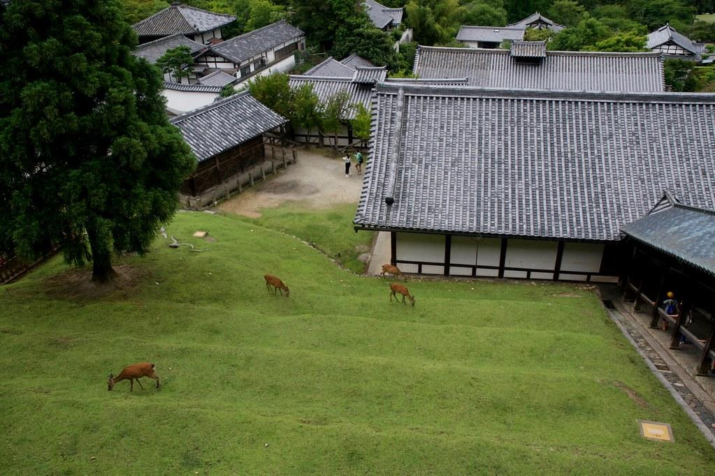 Nara Nigatsudo_07