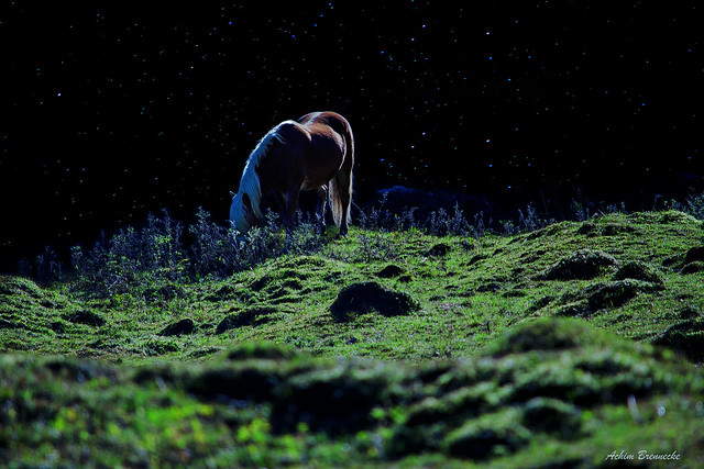 Nighthorse ...