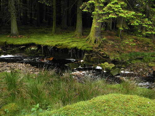 A stream on our walk just past the Ladybower Reservoir in the Peaks District of England