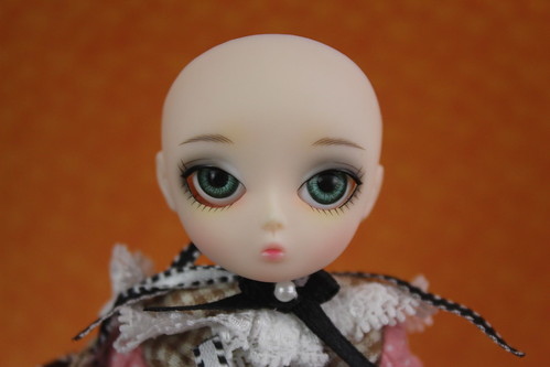 Camellia face up